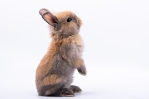 Baby cute rabbits has a pointed ears, brown fur and sparkling eyes, on white Isolated background, to Easter festival and holidays concept.